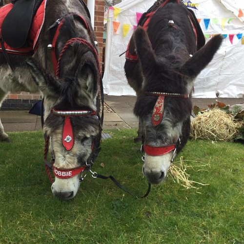 Donkey Day, Celebrating Holy Week